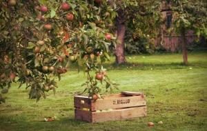 orchardedited